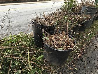 Yard Waste 2.jpg