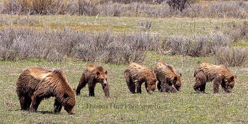 ROYAL FLUSH 2021 - GrizzlyBears