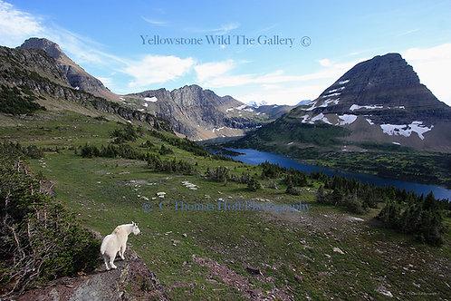 HIDDEN LAKE - Mountain Goat