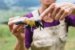 Bienenwanderung ©Maria Kirchner Fotografie