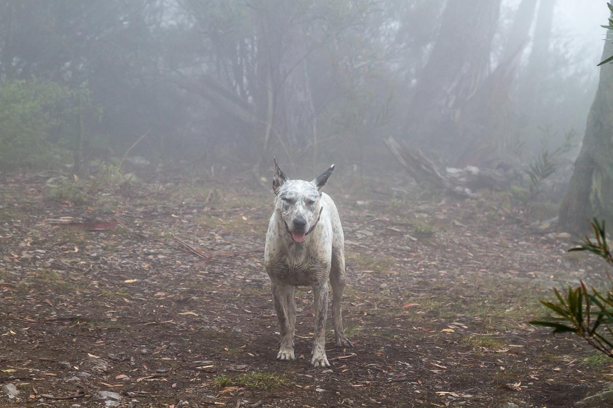 Ежик... то есть песик в тумане