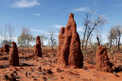 FF2_image_source_termite-mounds