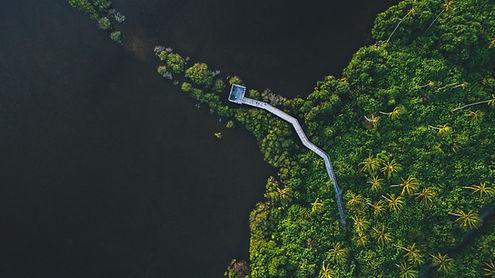 Foto aérea de uma floresta
