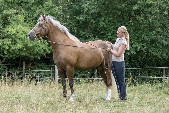 Andrea mit Pferden-43.JPG