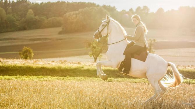 Vortrag mit Diana Krischke zum Thema Pferdebeurteilung