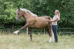 Andrea mit Pferden-42