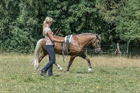 Andrea mit Pferden-37.JPG