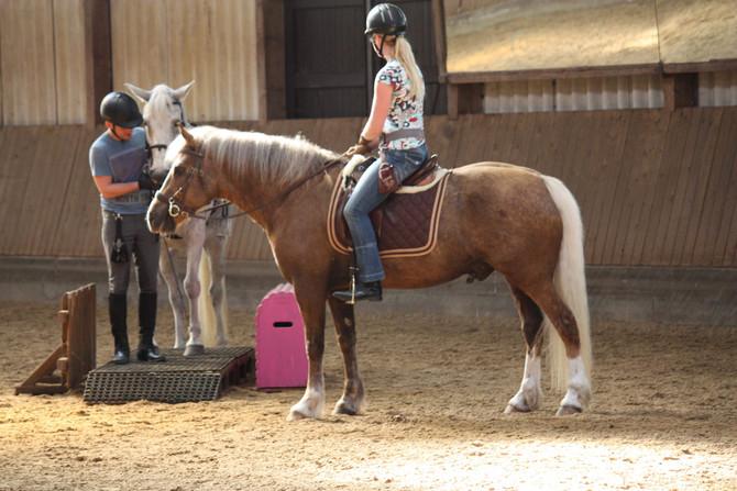 Working Equitation Kurs mit Sonja Barg