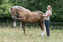 Andrea mit Pferden-41