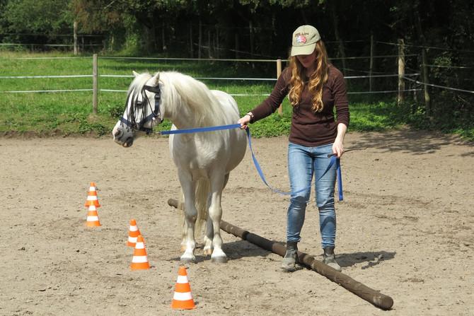 """Tag des offenen Reitplatzes """"Vielseitige Pferdeausbildung"""""""