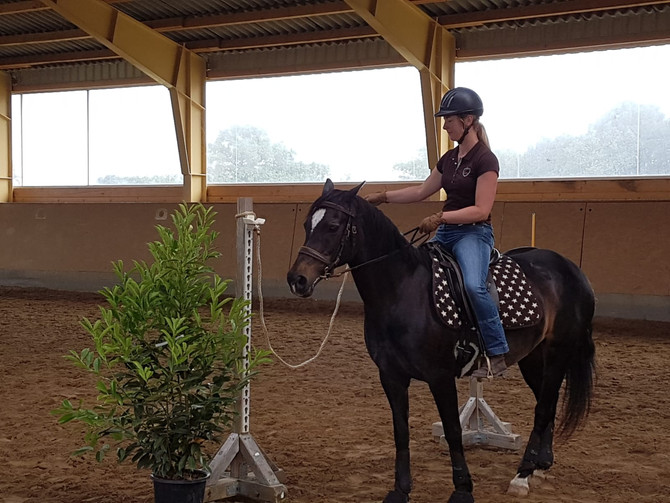 Working Equitation Training mit Judith Richter in Neu Nordsee