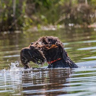 Lambo Duck Retrieve