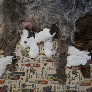Pups 2 days old