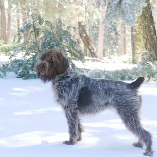 Palomar Mountain snow day