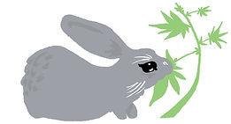 tulsa rabbit