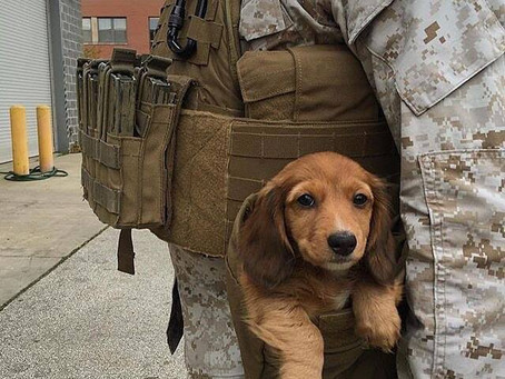 Awww look at the wittle tactical puppy...