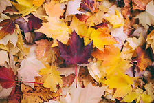 Autumn-leaves-1.jpg