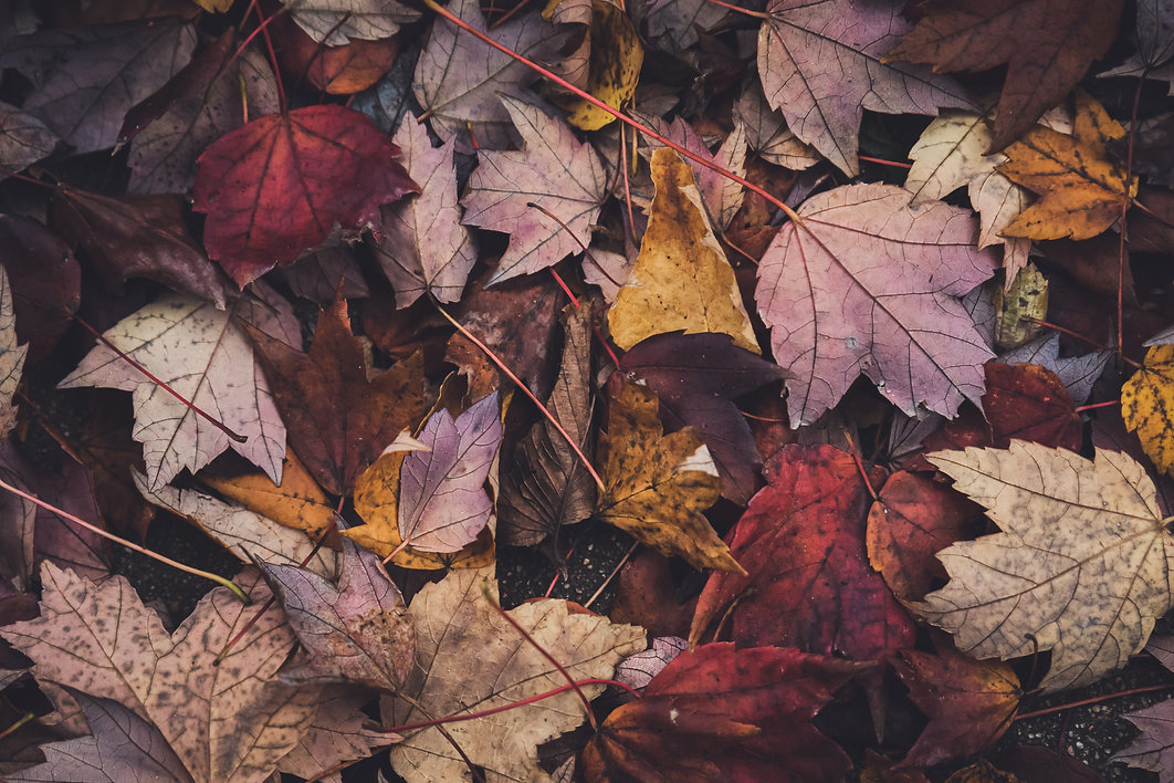 negative-space-assorted-fall-leaves.jpg