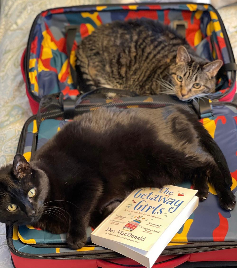 kitties travel too