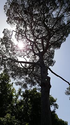 chateau saint denis arbres centenaires