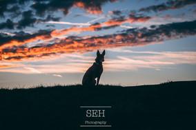 SEH_6471.jpg