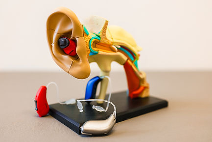 Ear anatomy mold representing the vestibular system tested by audiologist High Level Speech & Hearing Center in Harahan, LA