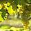 Thumbnail: Bas-Armagnac Tariquet VSOP