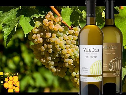 Côtes de Gascogne blancs - Duo de Villa Dria