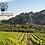 Thumbnail: Baux de Provence Rosé, Domaine de la Vallongue