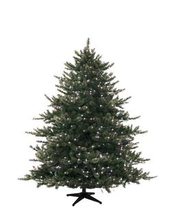 Christmas Tree Wide