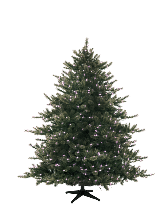 Why Sell Christmas Trees Under Tents