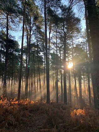 woodland.jpeg