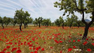 Beneficios de la agricultura regenerativa en cultivo de almendro
