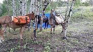overnight trail rides montana
