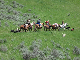 Montana trail ride