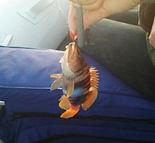 Дивноморское. Моркая рыбалка на ставриду