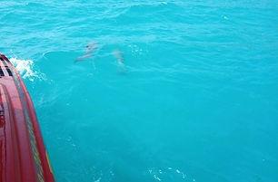 Морские экскурсии Рыбалка на Черном море в Архипо-Осиповке