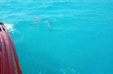 Морские экскурсии, рыбалка на Черном мор