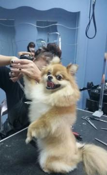 Стрижка собак (груминг)