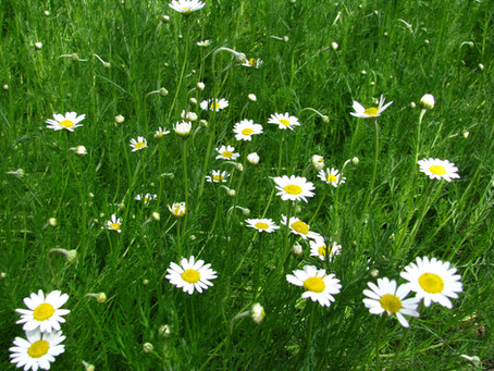 Living with our landscapes and giving up the lawn