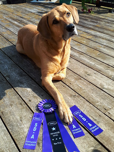 Copper with his ribbons