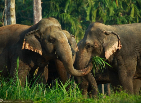Why We WON'T Be Riding Elephants on Our Couples Thailand Trip