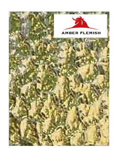 Amber Flemish