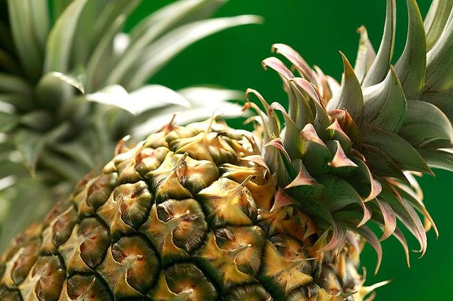 planta deshidratadora de piña en juan rodriguez clara, veracruz