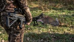 crossbow deer down.jpg