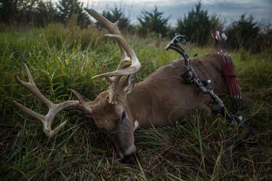 buck bow arrows.jpg
