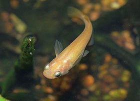 Pesce nel servizio di incontri stagno