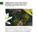 Addio pesci rossi, benvenuti Medaka, pesciolini del riso!
