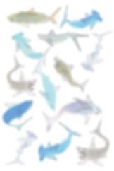 Sharks_4x6.jpg
