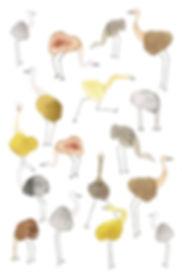 Ostrich_4x6.jpg